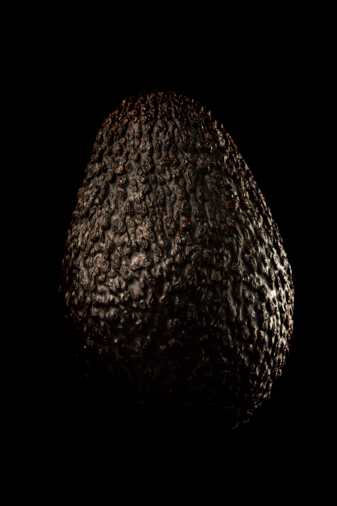 Portrait of an avocado on a dark background.